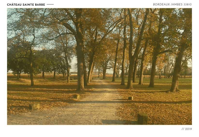 feuille marron automne chemin
