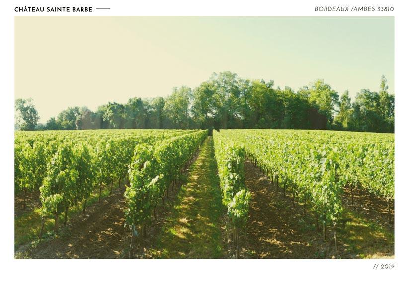 vigne taillés